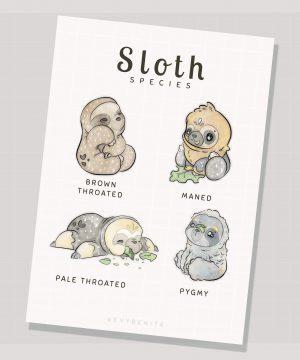 Sloth species illustration by Evy Benita